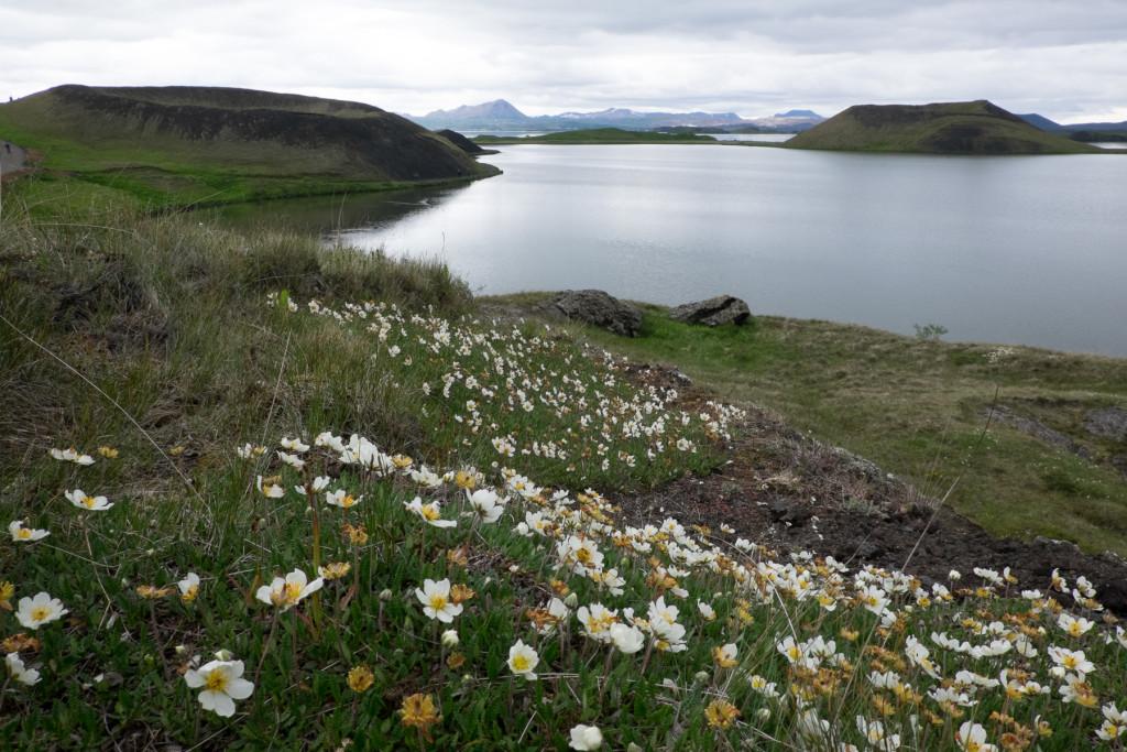 Photo 7. Rootless craters at Skútustaðir